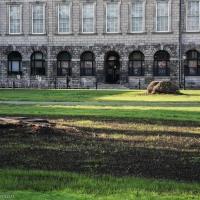 Trinity Trees Tragedy